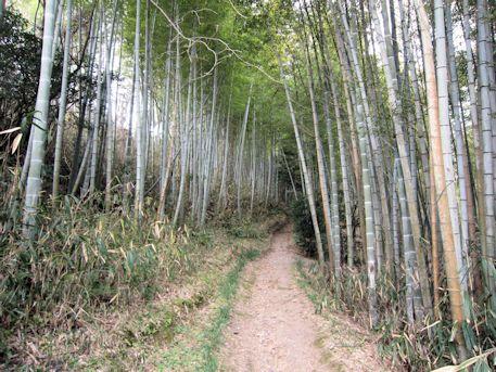 石上大塚古墳・ウワナリ塚古墳へ続く竹林