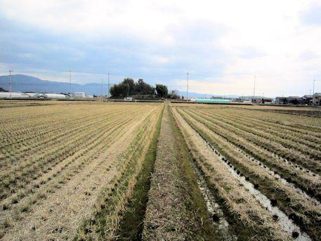 東田大塚古墳の遠景