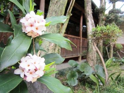 大正楼中庭の花