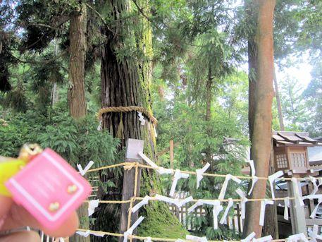 ランドセル守と巳の神杉