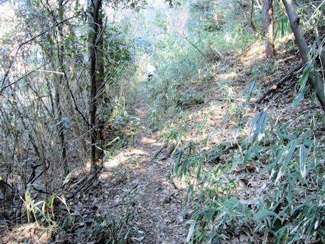 岡の立石の藪道