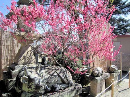 菅原神社の牛像と梅花