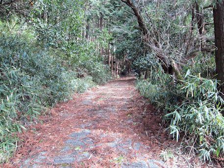 打上古墳の林
