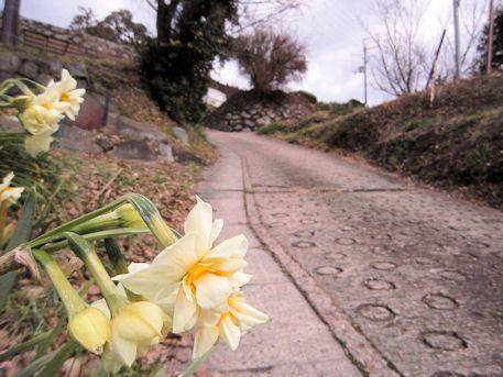 水仙とアクセスルート