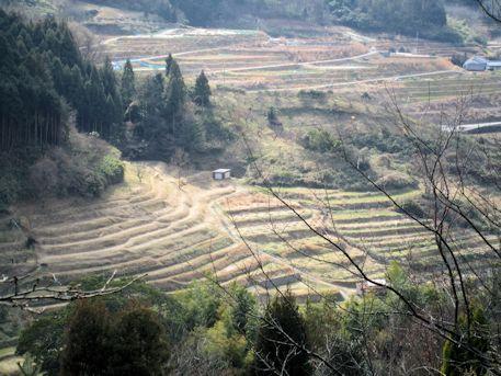 明日香村細川の棚田風景