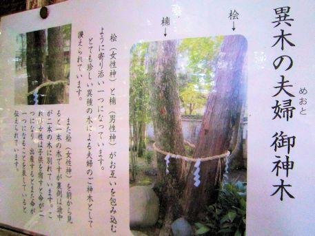 八幡神社の夫婦御神木ガイド