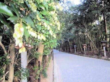 大神神社の馬酔木