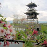 唐古鍵遺跡の桜