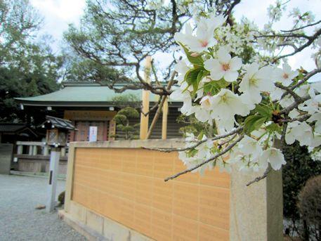 大神神社宝物収蔵庫と桜