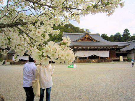大神神社祈祷殿と桜