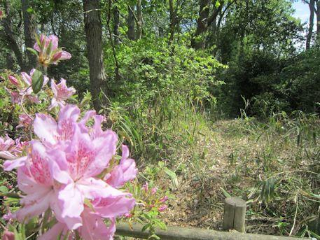池上古墳と花