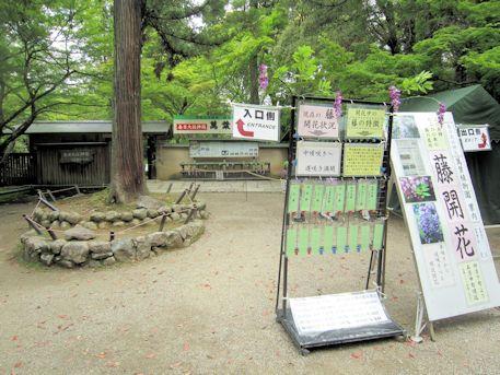 春日大社の萬葉植物園