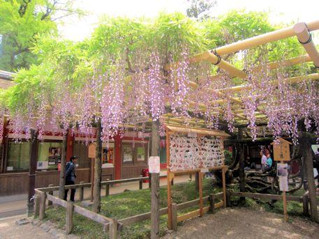 春日大社砂ずりの藤