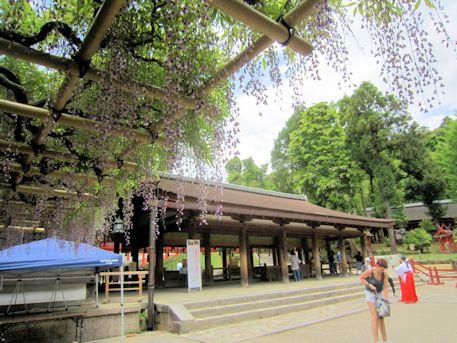春日大社舞殿と砂ずりの藤