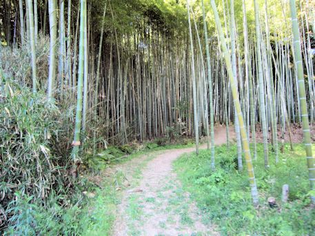 寺崎白壁塚古墳の竹林