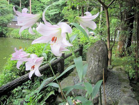 三島由紀夫記念碑とささゆり