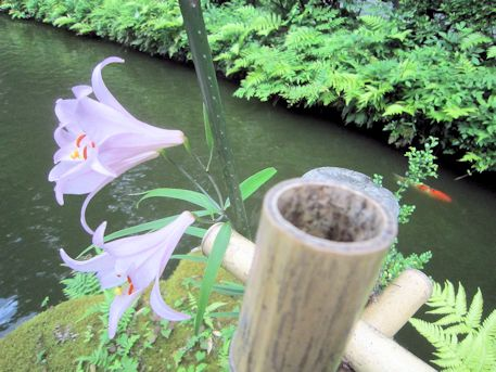 市杵島姫神社のささゆり