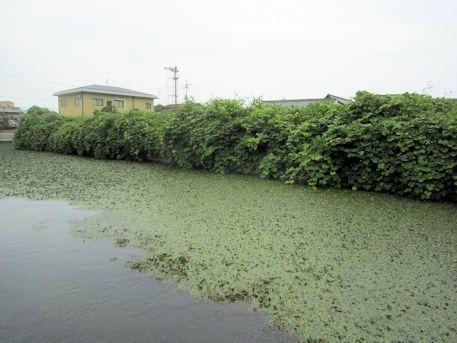 芝村藩陣屋の濠跡
