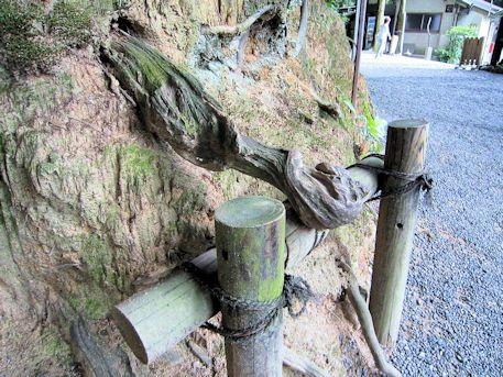 狭井神社のパワースポット