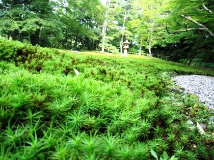 吉城園の苔庭