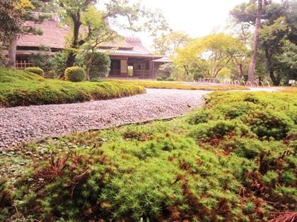 杉苔と茶室