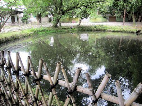 大湯屋横の池
