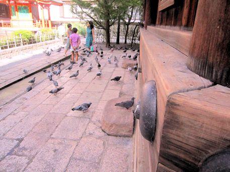 六角堂の鳩