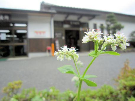 笠そば処と蕎麦の花