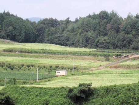 笠地区の蕎麦畑