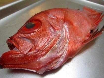 キントキ鯛の下顎