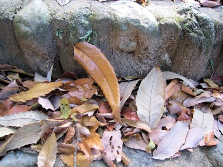石段の落葉