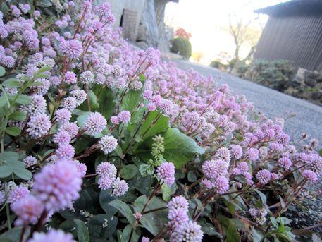 聖林寺山門下の花