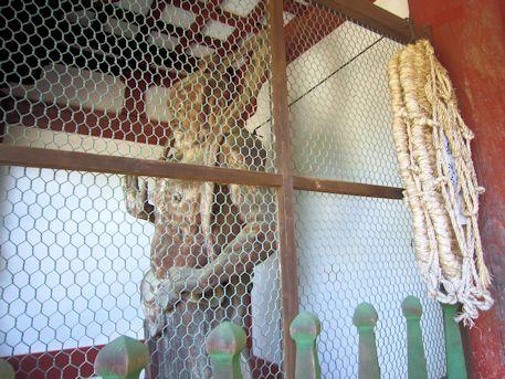 岡寺の仁王像
