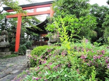 漢国神社の萩