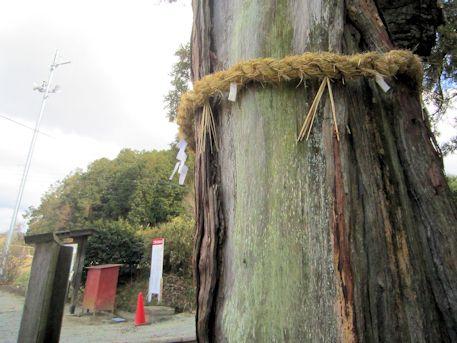 光雲寺の厄除杉