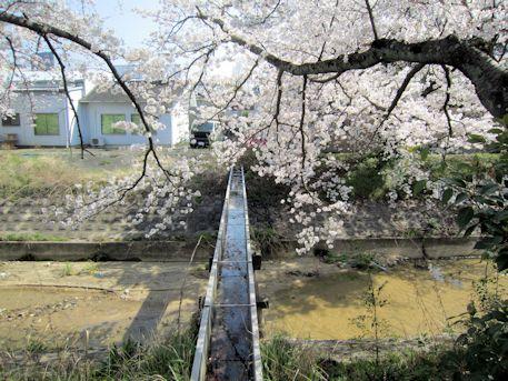 粟原川の水路