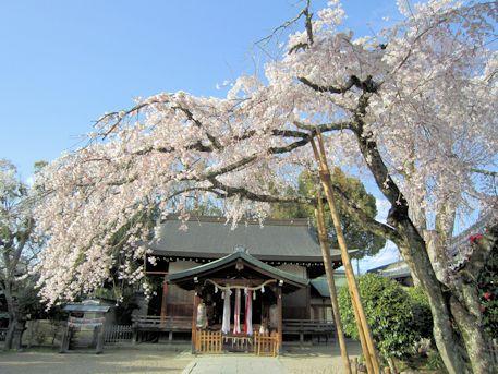 三輪坐恵比須神社の桜
