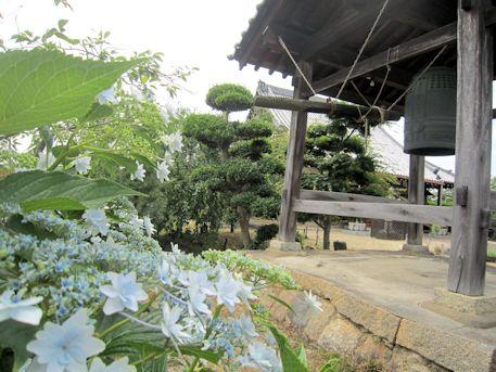 新家長福寺の紫陽花
