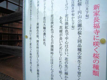 新家長福寺の桜ガイド