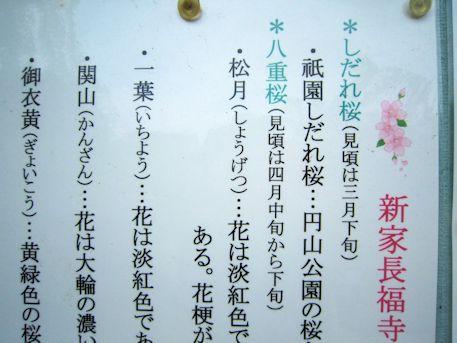 新家長福寺の桜案内