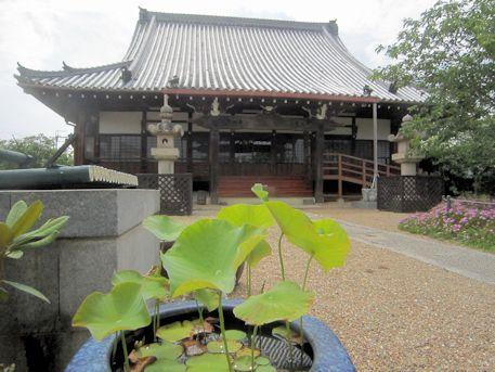 新家長福寺の蓮