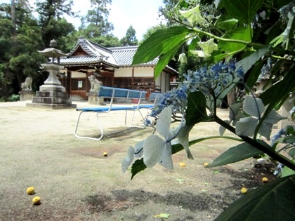 糸井神社境内のベンチ