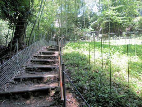 ささゆり園の階段