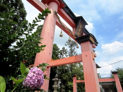 糸井神社鳥居と紫陽花