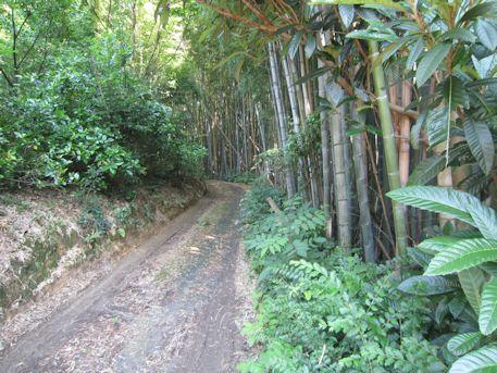 帯解黄金塚古墳の竹林