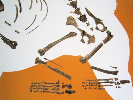 纒向遺跡出土の犬の骨