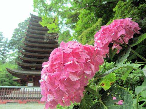 談山神社十三重塔と紫陽花