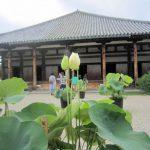元興寺の蓮