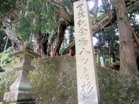 天然記念物八ツ房杉の石標