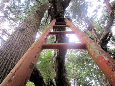 八ツ房杉の補強材